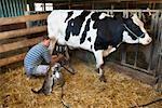 Farmer Milking Cow