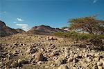 Rocky Desert, Israel