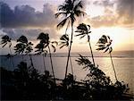 Brazil, Salvador de Bahia, palm tree.