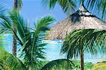 Mauritius island, palm tree