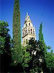 Spain, Andalusia, Cordoba, la Mezquita belfry-minaret