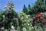 Espagne, Andalousie, Grenade, l'Alhambra, jardins du Generalife au printemps
