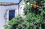 Espagne, Andalousie, Ronda, finement travaillé balcon et oranger