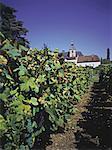 France, région Champagne, Abbaye d'Hautvilliers où le moine Dom Pérignon découvrit champagne