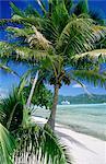 Polynésie française, îles sous-le-vent, croisière