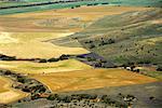 Des terres agricoles, l'Australie-occidentale, Australie