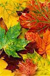 Blätter im Herbst