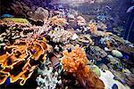 Aquarium at Underwater World, Sentosa Island, Singapore