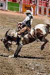 Rodeo, Stampede de Calgary, Calgary, Alberta, Canada