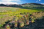Ronny Creek et Crater Peak, Cradle Mountain Lake St. Clair National Park, Tasmanie