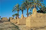 Egypt, Luxor, temple.