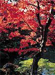 Japan, Nikko, Rinno Ji temple