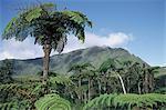 Reunion, forest