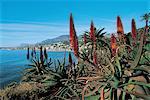 France, Côte d'Azur, cactus et Menton