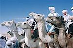 Algérie, Sahara, Tassili Ajjer national park, oasis de Djanet, course de chameaux pendant la Sebiba.