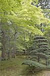 Japon, Kyoto, temple Kokedera, jardins de mousse