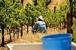 Farmer in a vineyard