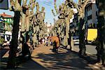 People walking on a tree lined sidewalk, Spain