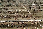 Vue aérienne d'engraissement de bovins plus grand du monde (120 000 têtes). Boeuf de Monfort, CO