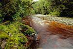 Oparara River, Kahurangi National Park, South Island, New Zealand
