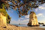 Péninsule de Coromandel, North Island, Nouvelle-Zélande