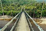 Pont dans le Parc National de forêt Kahurangi, South Island, Nouvelle-Zélande