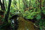 Flux à travers la forêt tropicale, Westland National Park, Nouvelle-Zélande