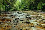 Oparara River, Parc National de Kahurangi, Nouvelle-Zélande