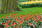 Tulipes et des jonquilles, jardins de Keukenhof, Hollande, Pays-Bas
