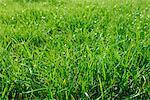 Pré d'herbe