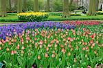 Tulips, Keukenhof Garden, Holland Netherlands