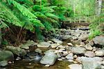 Parc National des Yarra Ranges, Victoria, Australie