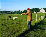 Agriculteur je regarde bovins