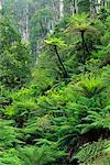 Rainforest, Yarra Ranges National Park, Victoria, Australia