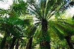 Rainforest, Tarra Bulga National Park, Victoria, Australia