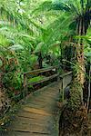 Boardwalk, Otway National Park, Victoria, Australie