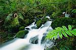 Ruisseau, Parc National des Yarra Ranges, Victoria, Australie