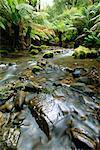 Rivière Tarra, Parc National de Tarra Bulga, Victoria, Australie