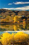 Autumn Hillside, Bannockburn, Otago, South Island, New Zealand