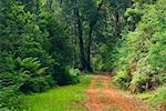 Road in Forest, Yarra Ranges National Park, Victoria, Australia