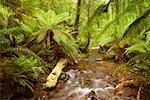 Stream, Yarra Ranges National Park, Victoria, Australia