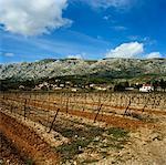 Vignoble, Aix-en-Provence, Provence, France