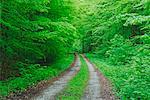 Straße durch Wald, Nationalpark Hainich, Thüringen, Deutschland