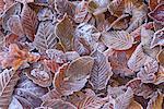 Herbstszenen überdachte in Frost