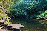 Coachwoods piscine, le Parc National Washpool, New South Wales, Australie