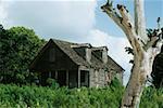 Vue latérale d'une maison abandonnée au milieu de la verdure, sud d'Eleuthera, Bahamas
