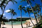 Vue de l'angle faible de palmiers sur la plage, l'hôtel Somesta, Bermudes