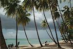Vue sur une belle plage sur une journée ensoleillée, Pigeon Point, Tobago