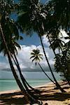 Vue sur une belle plage sur une journée ensoleillée, Pigeon Point, Tobago, Caraïbes
