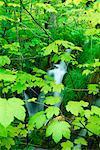 Cascade, Parc National de Plitvice, Croatie